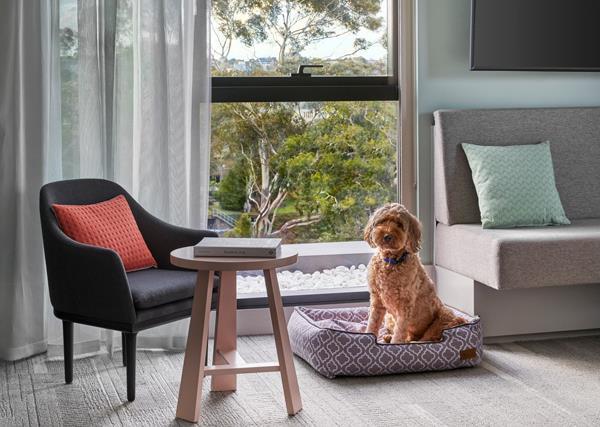 Dog in Element hotel, Melbourne