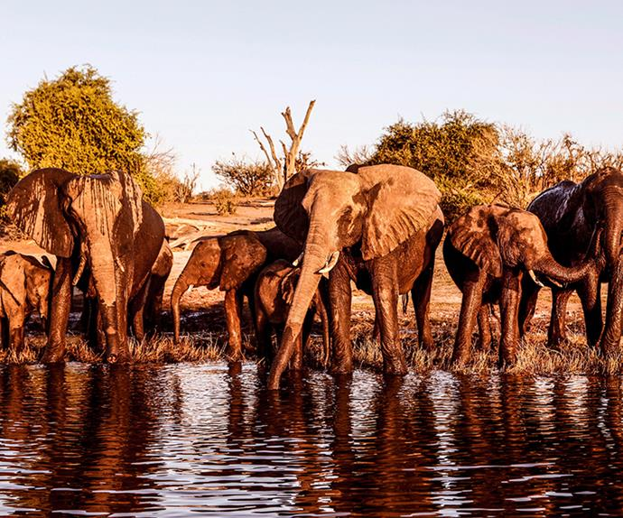 Experience the best of Africa