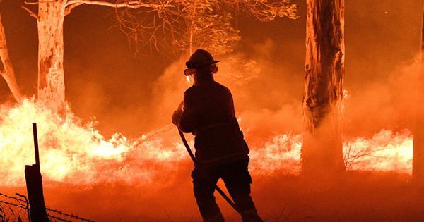 Australian bushfires: restaurants and cafés where you can donate | Gourmet Traveller