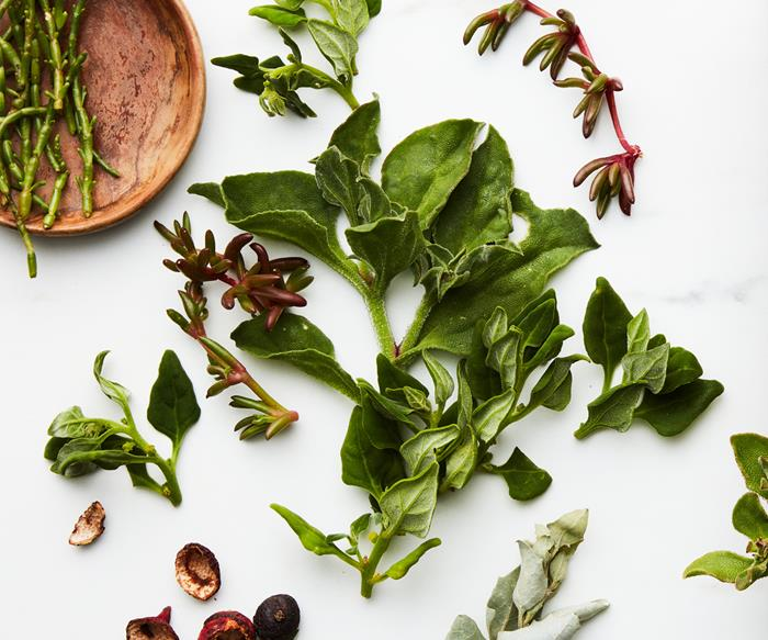 """""""Respectfully and steadily"""": the case for growing Australia's native ingredients industry"""