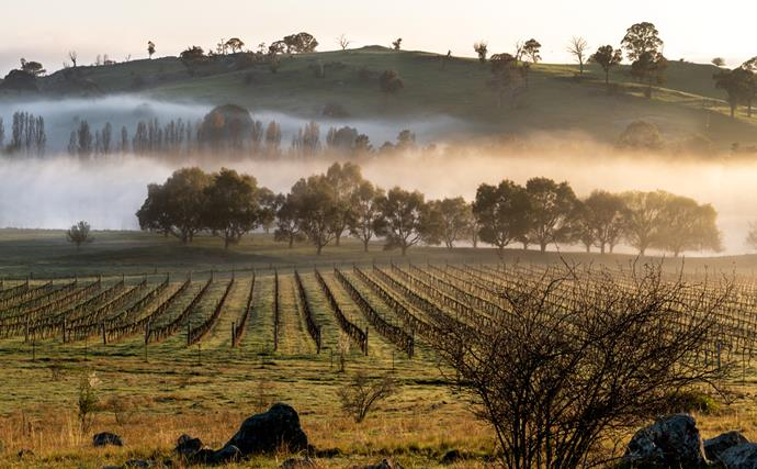 Canberra's wine region: where to drink, eat and stay