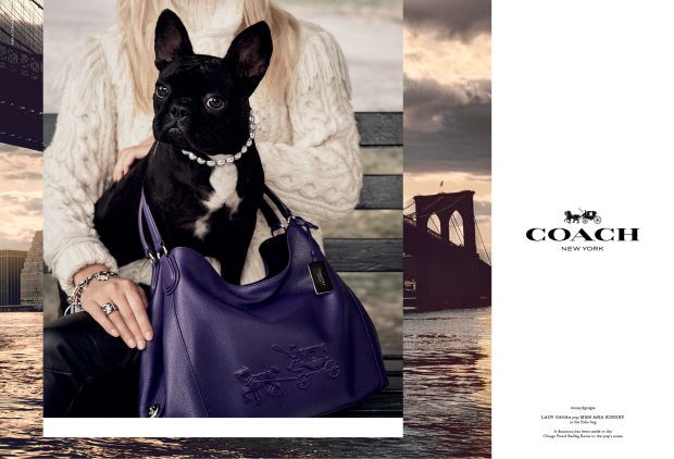 <strong>What: Coach <br>Who: </strong>Steven Meisel captured none other than Lady Gaga's dog Miss Asia Kinney for the campaign.