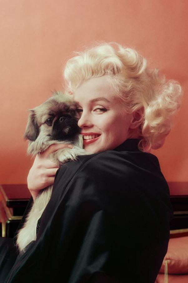 <em>Marilyn Goes Oriental with Pekenese Dog, NY,</em> 1955