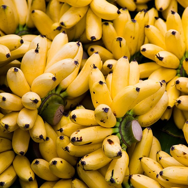 <strong>Bananas</strong> <br><br> Bananas contain dopamine (the natural reward chemical that boosts your mood). They're also rich in B vitamins, including vitamin B6, which helps to soothe your nervous system, and magnesium, another nutrient associated with positive mood. Just be careful to limit them if you have insulin/leptin resistance.