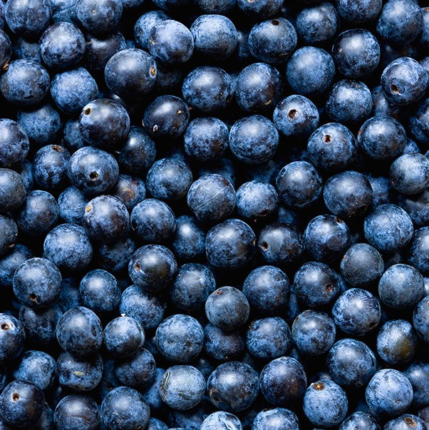 <strong>Purple Berries</strong> <br><br> Anthocyanins are the pigments that give berries like blueberries and blackberries their deep colour. These antioxidants aid your brain in the production of dopamine, a chemical that is critical to coordination, memory function and your mood.