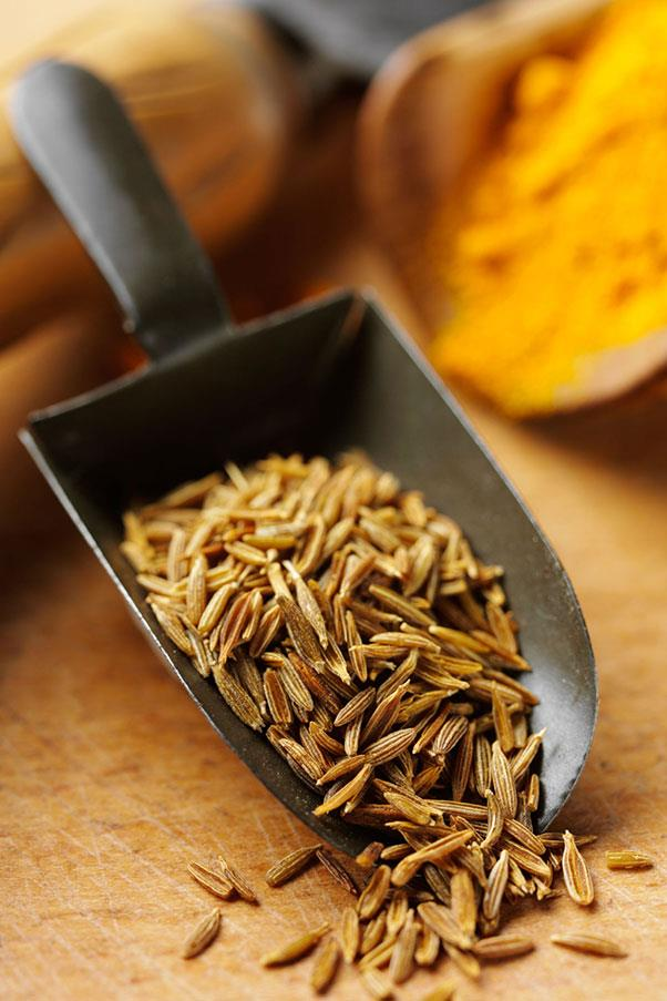 """<strong>CUMIN </strong><br><br> COO-min, KYOO-min or CUH-min <br> <em>Spice made of the seeds of a plant of the parsley family, used most often in Indian and Mexican food; also the plant itself that bears the seeds</em>. <br> Cumin is a spice with an identity problem. It is most frequently pronounced """"COO-min,"""" but dictionaries also include """"KYOO-min"""" and """"CUH-min""""- as in, """"come in and tell me how to pronounce this annoying word."""" Until very recently, this latter pronounciation was the only one in most dictionaries. But just as more people began using the spice itself, so too more people began saying it with a long u (""""COO"""") or with what's called a y-glide (""""KYOO""""), so lexicographers added these pronunciations; some even making them preferred way to say cumin... which is where we are now. <br> Cumin comes from the Old English <em>cymen</em>, by way of the Latin <em>cuminum</em>, which was from the Greek <em>kuminon</em>- which probably evolved from Hebrew's <em>kammon </em>and Arabic's <em>kammum</em>. It has been spelled numerous ways including <em>commin</em>, <em>commin(e)</em>, <em>comeyn</em>, <em>cummyn </em>and <em>comyn</em>- none of which seem like they'd have the """"KYOO"""" sound at all... which makes us wonder about the """"COO"""" as well. <br> So which is right? Since variety is the spice of life, let's just let them co-exist, although personally we're in the """"COO-min"""" camp."""