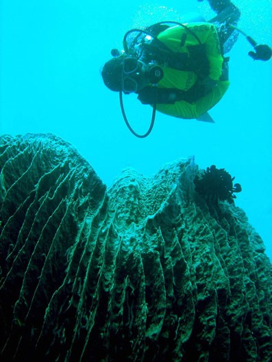 """<strong>11. Tabbataha Reef Marine Park: Philippines</strong> <br><br> <a href=""""http://whc.unesco.org/en/list/653"""">Tabbataha Reef</a> spans 502 miles and features an incomparable 328-foot tall wall of coral. It also contains vast varieties of marine animals, including fish, dolphins, sea turtles and more. The reef is part of the Coral Triangle (an area that encompasses the waters surrounding Indonesia, Malaysia, Papua New Guinea, the Philippines, the Solomon Islands and Timor-Leste), which is currently threatened by <a href=""""http://wwf.panda.org/what_we_do/where_we_work/coraltriangle/problems/"""">overfishing and climate change</a>, meaning its diverse marine population is at risk."""