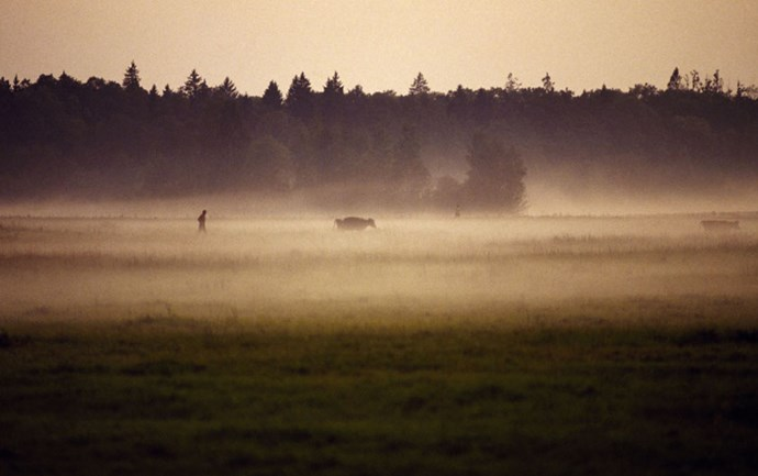 """<strong>14. Białowieża Forest: Belarus and Poland</strong> <br><br> <a href=""""http://whc.unesco.org/en/list/33"""">Białowieża Forest</a> contains nearly 548 miles of centuries-old wilderness that's been completely undisturbed by humans. The forest also holds a mystical landscape of meadows and river valleys, and is home to large populations of wolves, lynxes and otters."""