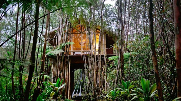 """<strong><a href=""""https://www.airbnb.com.au/rooms/2615058"""">The Tropical Tree House</a> in Fern Forest, Hawaii </strong>.<p><p> Lush forrets + sweet yellow furnishing + a big swinging bed = one leafy green 'gram.<p> $275 per night"""