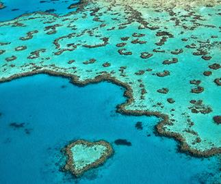 Tiffany & Co. And The Great Barrier Reef Foundation Are Celebrating A Major Breakthrough