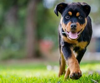 Details of 2017 PetStock's Pet Adoption Day