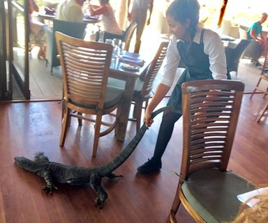 Waitress drags huge goanna she thought was a dog out NSW restaurant, promptly goes viral