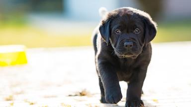 50 names for black dogs that couldn't be more perfect