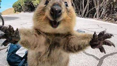 Man who filmed his friend kick a quokka has been fined