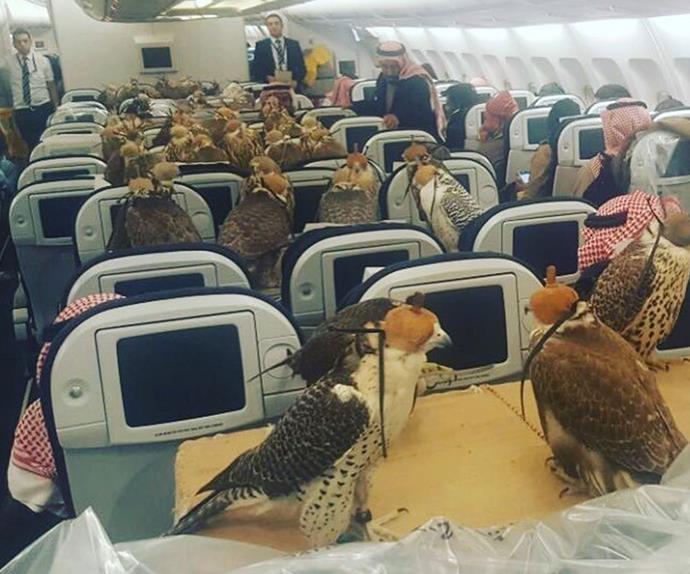 Falcons on Etihad