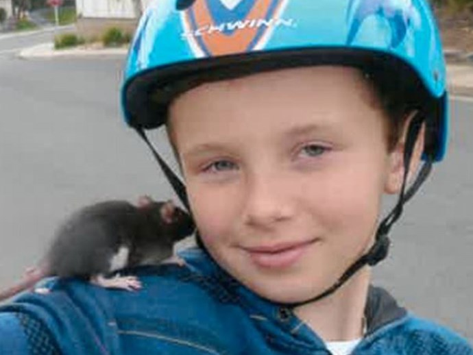 Ten-year-old boy dies from rat bite fever after buying infected pet rat