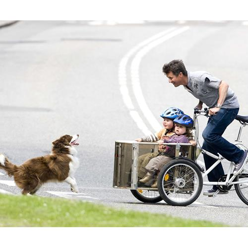 Danish Royal Familys dog Ziggy has died | Now To Love