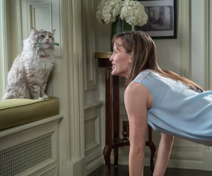 Just Cats Veterinary Clinic seek full-time cat cuddler