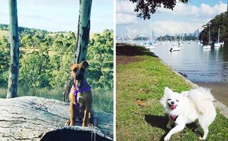Dog-friendly dog parks and beaches