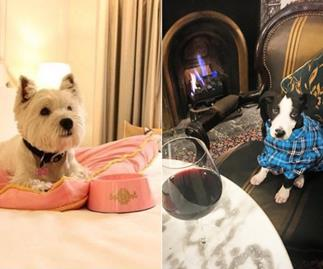 Dog friendly hotels Australia 2017