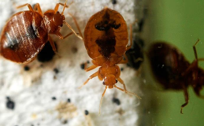 Teenager sets apartment block ablaze trying to kill a bed bug