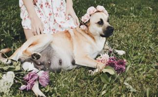 Dog's maternity shoot is definitely better than any humans