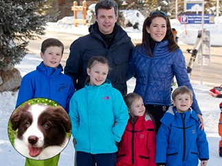 Princess Mary and Prince Frederick adopt Border Collie, Grace
