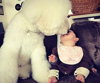 This baby and giant dog can only improve your day