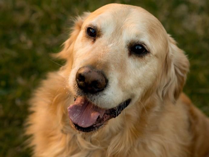 Meet Jack, Australia's dog of the year