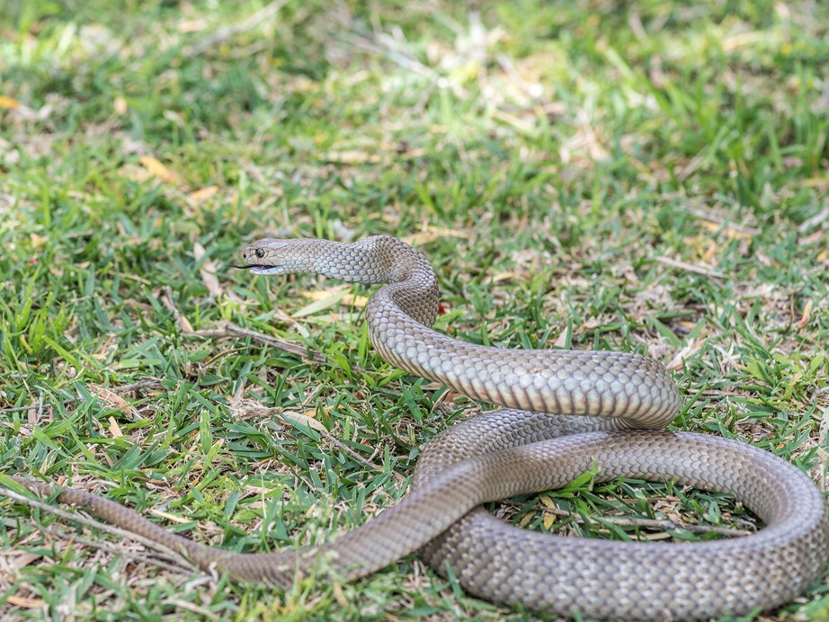The snake only measured in at 30cm long, but it was believed to have been venomous.