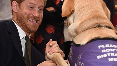 Prince Harry puts his best paw forward on World Mental Health Day