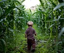 Parents lost 3-year-old boy in a corn maze and didn't realise until the next day