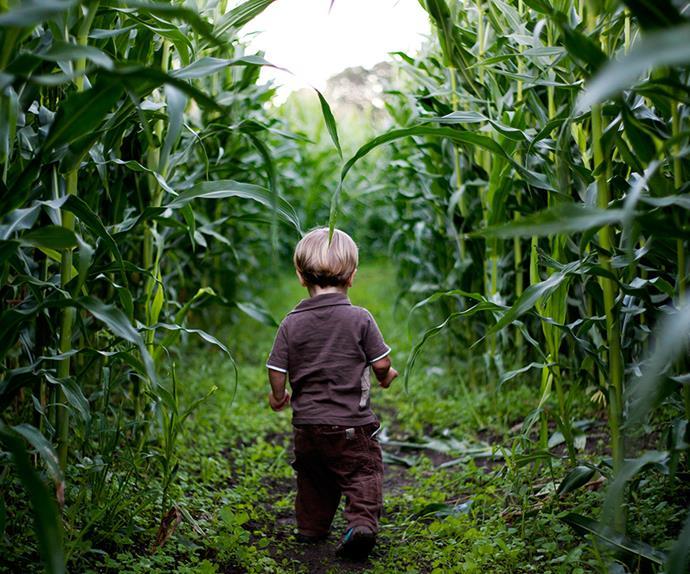 parents lose child in corn maze