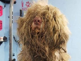You won't believe this neglected dog's transformation