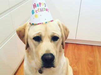 Samantha Armytage celebrates puppy Banjo's first birthday