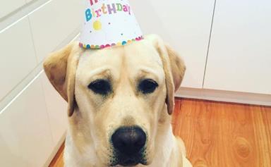 Samantha Armytage celebrates puppy Banjo's first birthday