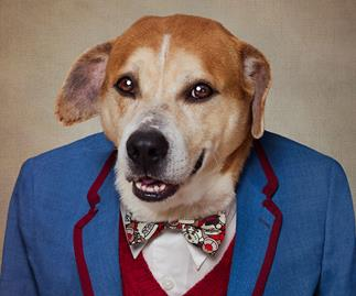 Could you adopt a senior dog?