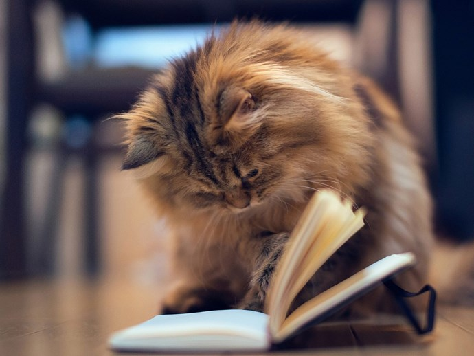 cat reading a book