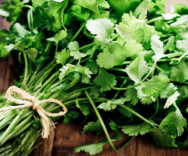 This is the REAL reason you hate coriander