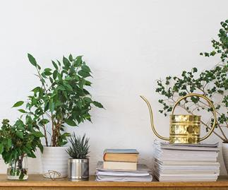 Why you should have at least 5 indoor plants in your home