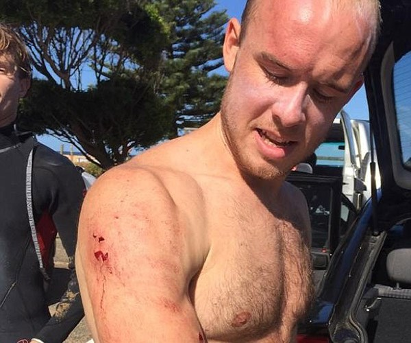 Surfer punches shark in the face