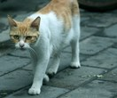 Queensland council stands by their bounty for feral cat scalps