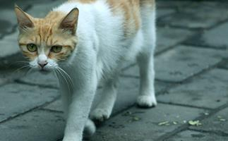 Qld council stands by their bounty for feral cat scalps