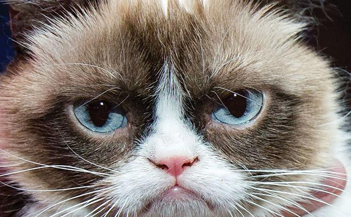 Is your cat acting a bit strange? How to tell if your cat is feline good