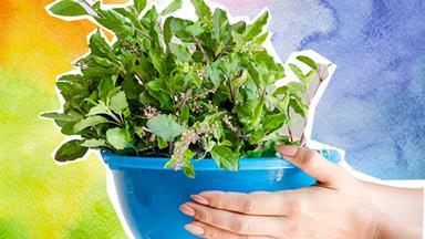How to plant summer garden with gardening guru Charlie Albone