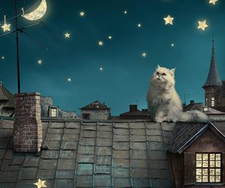 What can your cat's star sign reveal?