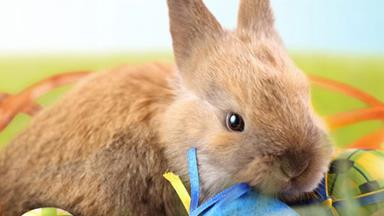 Kids can call the Easter Bunny this year