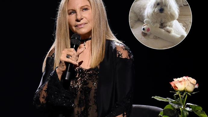 Barbra Streisand reveals two of her pups are clones of her late dog Samantha