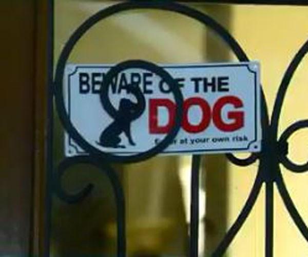 Dog attack