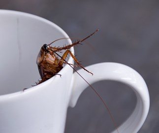 Cockroach milk: would you try this controversial superfood?